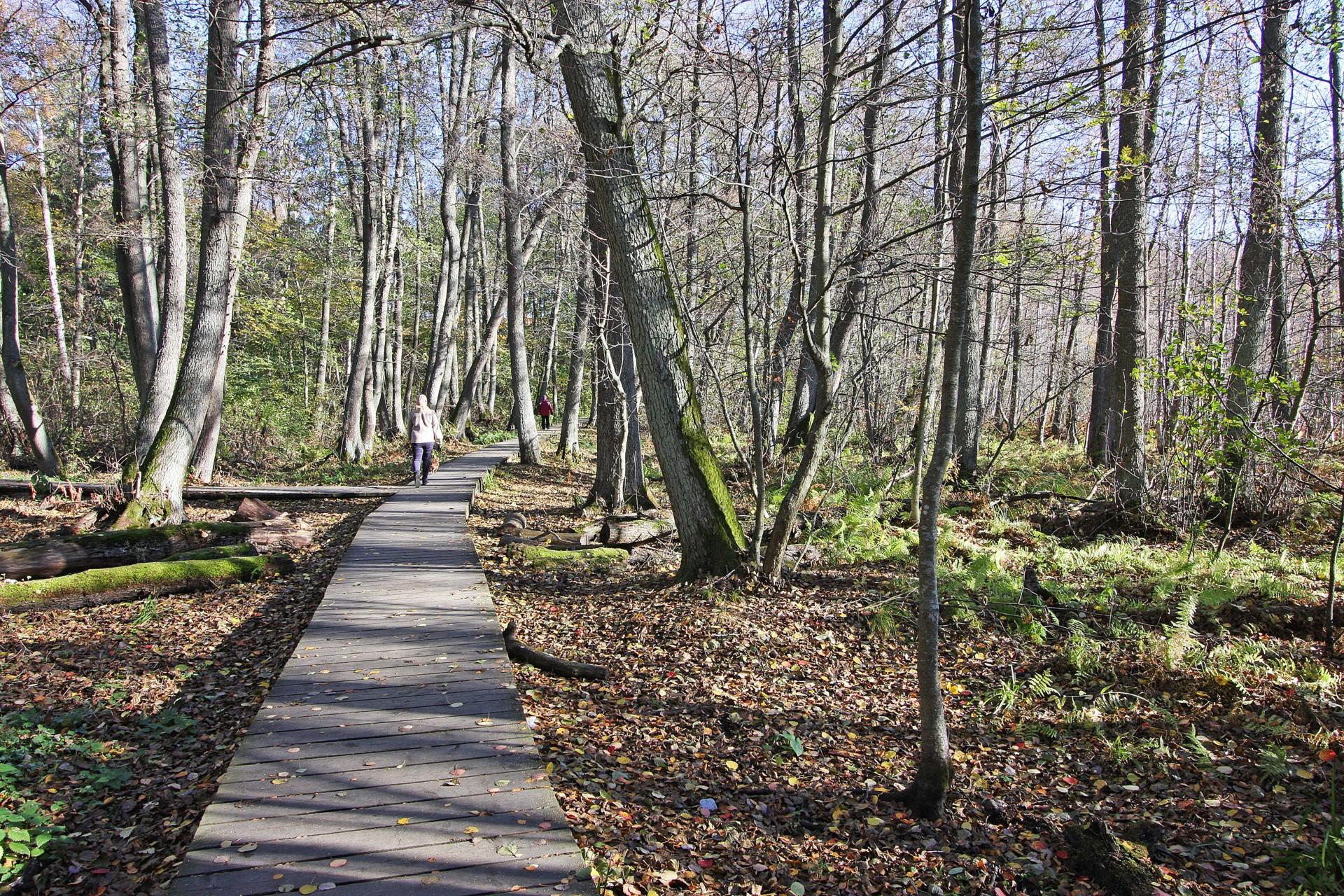 Fina löpspår runt Kyrksjön