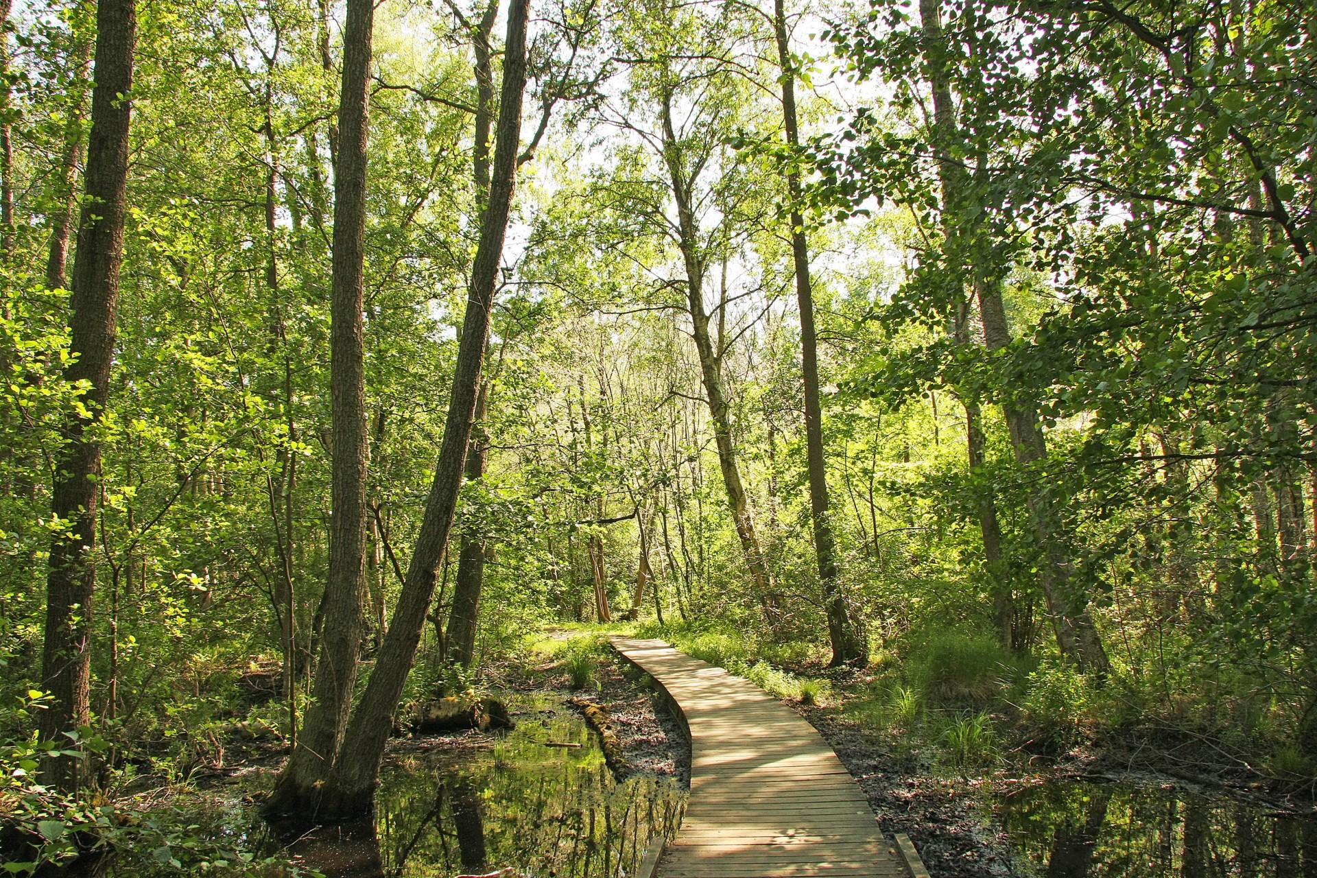 Promenadstig runt Kyrksjön