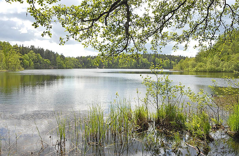 Sjön vid Judarskogens naturreservat