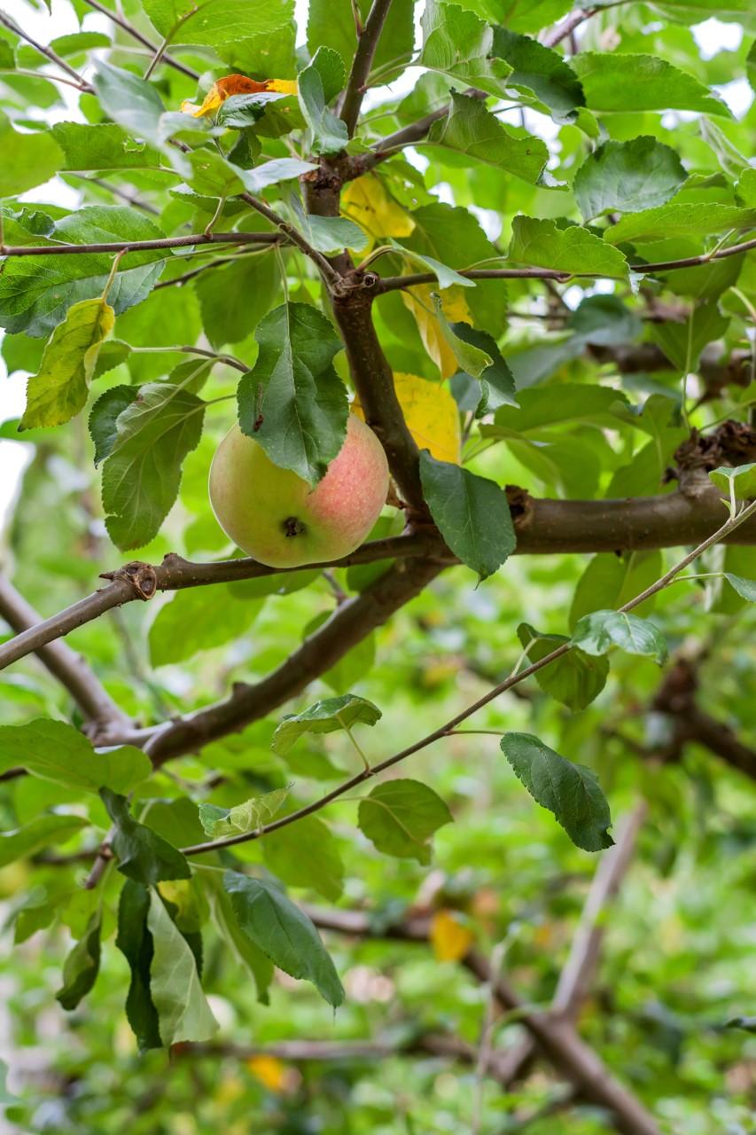 Tillgång till fruktträdgård