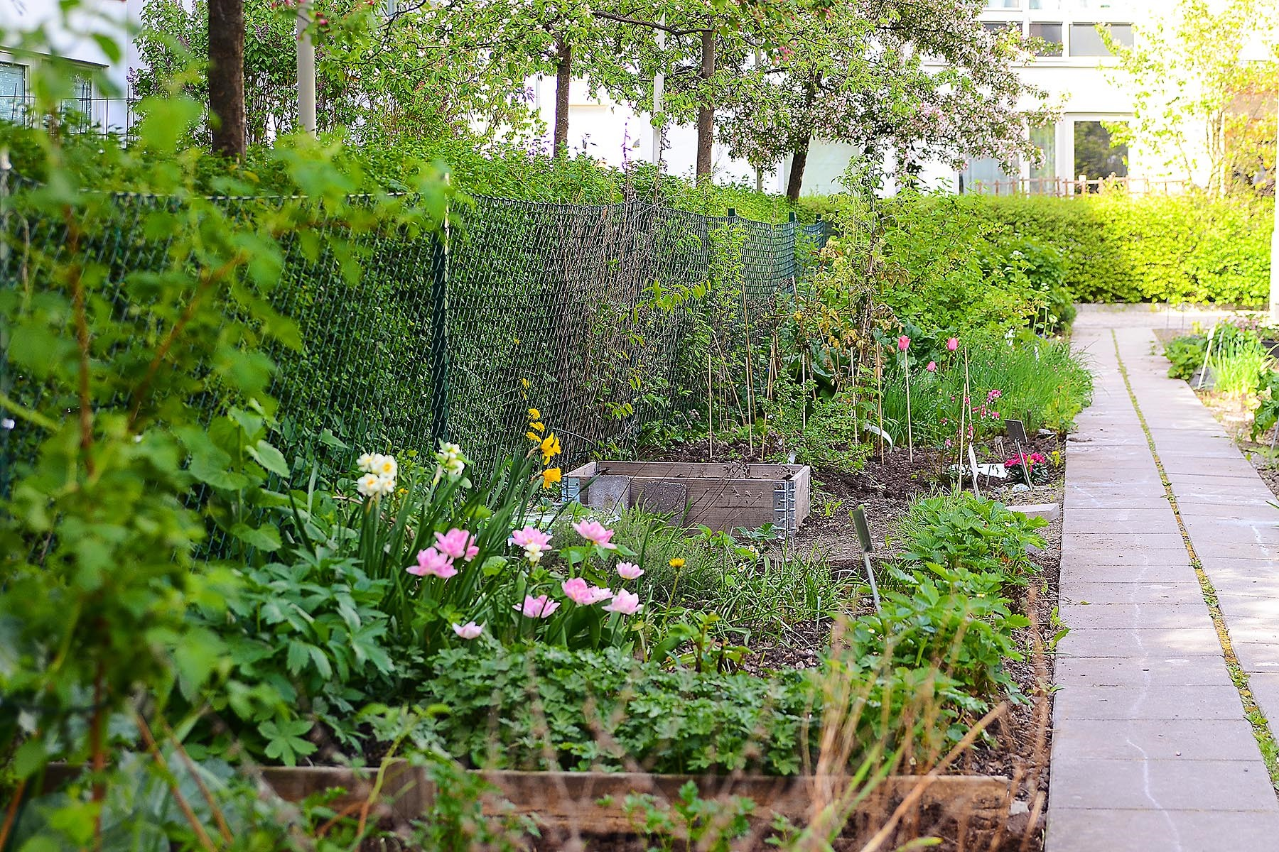 Lugnets Allé 69, 2 tr - På gården finns flera odlingslotter som hyrs ut till medlemmarna