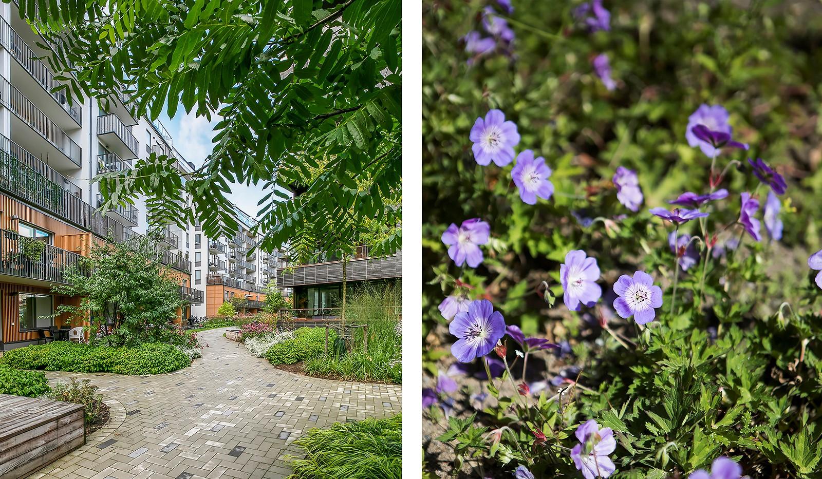 Hammarby Allé 15, vån 5 - Gården är inredd med diverse planteringar