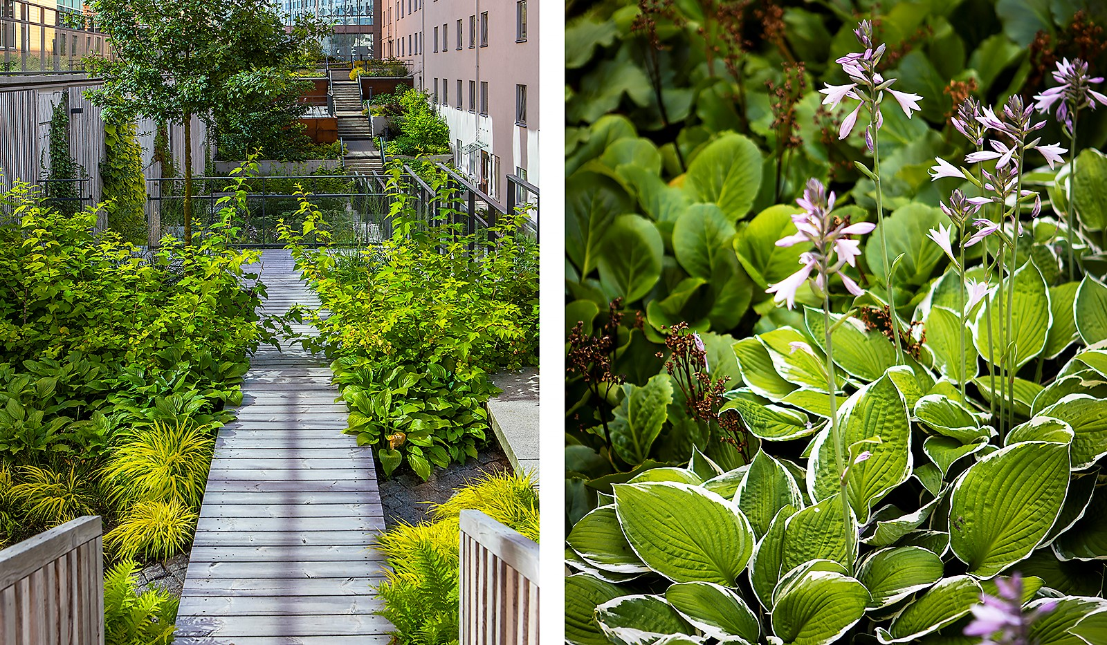 Fredriksdalsgatan 24, vån 2 - Här har man satsat på grönska och skapat en lummig oas mellan husen