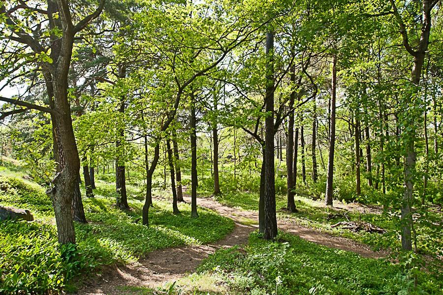 Sjöviksbacken 55, 4 tr - Grönskande skogsparti precis nedan