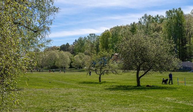 LM Ericssons väg 15, 1 tr - Generösa grönområden i Vinterviken